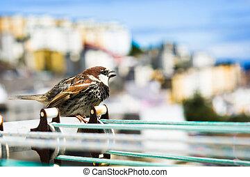都市, 物干し綱, 背景, 鳥