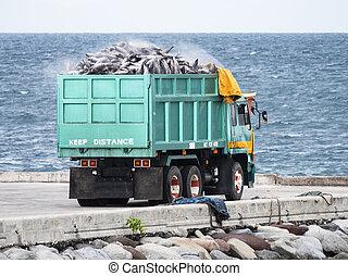 都市, gensan, フィリピン, トラック, 荷を積まれる, マグロ