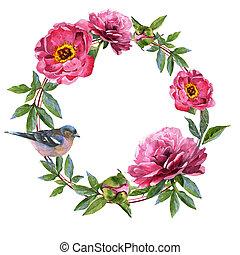 野生の花, シャクヤク, isolated., 水彩画, スタイル, フレーム, 花