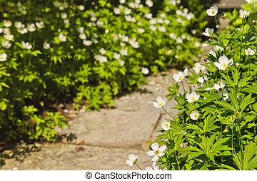 野生の花, 庭