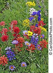 野生の花, 牧草地