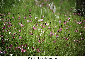野生の 花