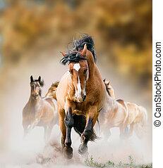 野生の 馬, 動くこと, 中に, 秋