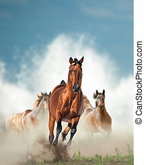 野生の 馬, 群れ, 動くこと, によって, ∥, 海岸