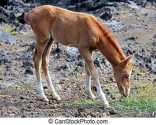 野生の 馬, 若い