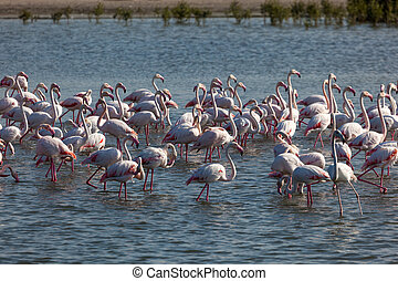野生生物保護区域, より大きい, khor, al, アラビア人, 合併した, 管轄区域, フラミンゴ, ras, ドバイ