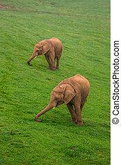 野生生物, アフリカ, サファリ, 家族, 象