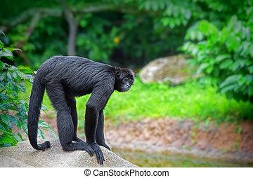 野生, くも 猿