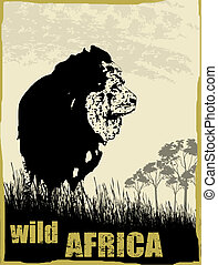 野生, アフリカ, イメージ, ∥で∥, ライオン