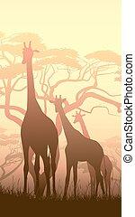 野生, アフリカ, キリン, sunset.
