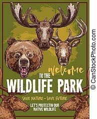 野生 動物, ベクトル, 動物園, スケッチ, 野生生物, ポスター