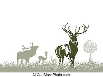野生 動物, deers