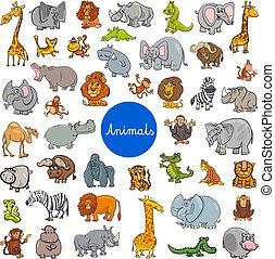 野生, 大きい, セット, 動物, 特徴
