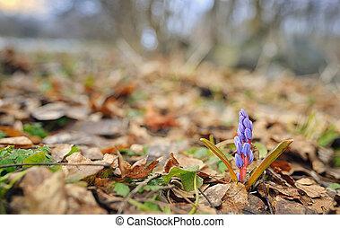 野生, 春の花, すみれ