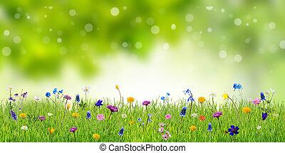 野生, 春の花, 背景