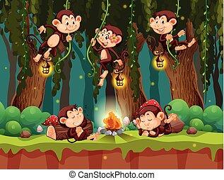 野生, 森林, サル