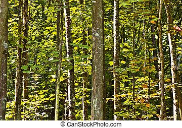 野生, 森林, 木