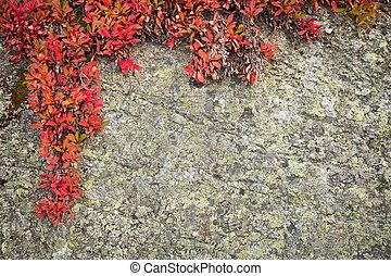 野生, 植物, 背景, 岩