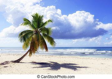 野生, 浜, punta, カリブ海, cana