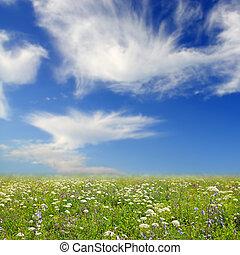 野花, 針對, the, 藍色的天空