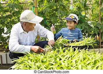 野菜 庭, 仕事, 孫, 祖父