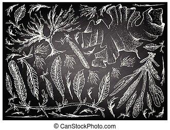 野菜, 手, 海草, 海, 引かれる, ∥あるいは∥, 黒板