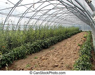 野菜, 有機体である, 中, 温室