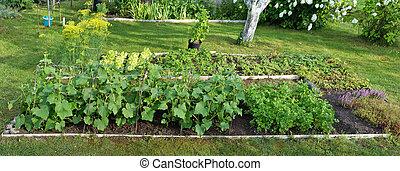 野菜, 耕作, スパイス