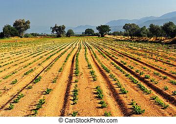 野菜, 農場