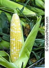 野菜, 農夫の 市場, 成果