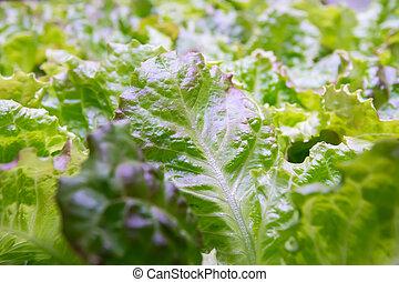 野菜, hydroponic, 技術, ライト, 有機体である, 成長しなさい, リードした, 農場, 屋内