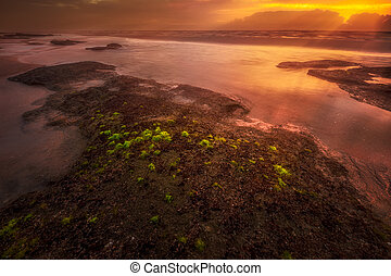 金色, 朦胧, 日出, 在上, florida's, 东海岸