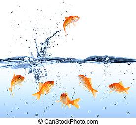 金魚, ∥ために探す∥, 出口