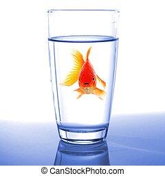 金魚, ガラス, 水