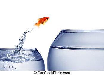 金魚, 跳躍, t, から