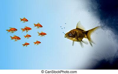 金魚, fish, 區域, 污染