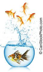 金魚, fishbowl, 跳躍, から
