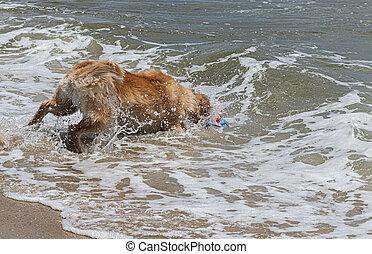 金, おもちゃ, 得ること, 海洋, レトリーバー, から