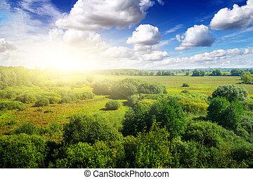 金, 下に, sky., 日当たりが良い, 青, 日, 森林