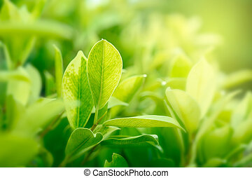 金, 自然, 庭, スペース, 明るい緑, 背景, 使うこと, コピー