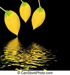 金, 葉, 美しさ