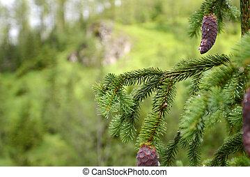 針葉樹の木