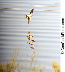 釣魚, 湖, 鳥
