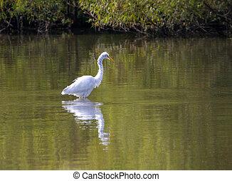 釣魚, 白鷺, 湖