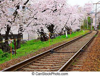 鉄道, 木, sakura