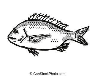 銀, オーストラリア人, 図画, レトロ, fish, bream, 漫画