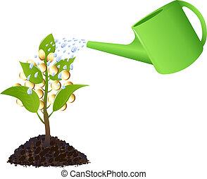 錢植物, 由于, 噴壺