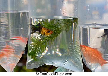 鑲嵌, fish