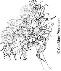 钢笔, 矢量, 勾画, 向日葵, 图