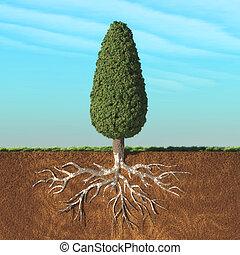 锥形物, 树, 带, root.